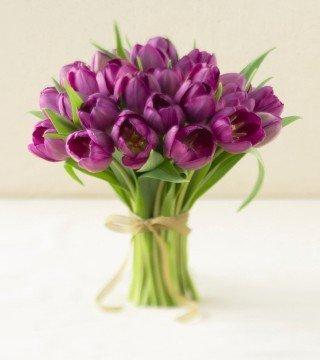 purpurowy wielokwiatowy tulipan w cebulkach