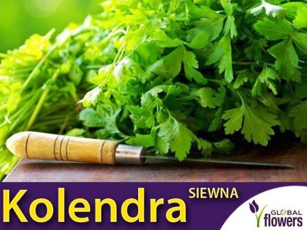 Kolendra siewna (Coriandrum sativum) 3g
