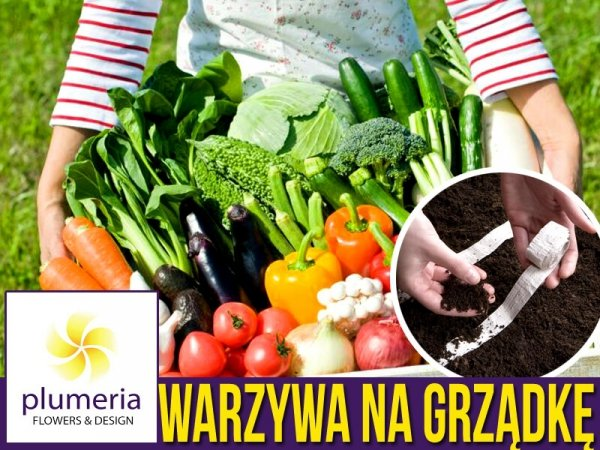 nasiona na taśmie zestaw nasion warzywa cena
