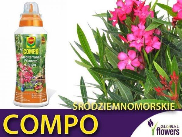 Nawóz płynny do roślin śródziemnomorskich COMPO 500 ml