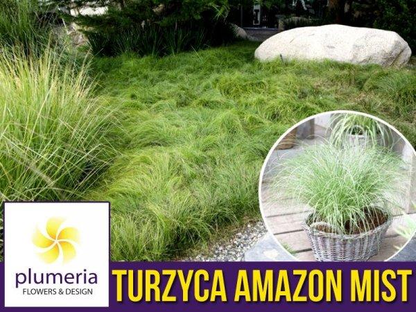 Turzyca włosowa AMAZON MIST (Carex comans) Sadzonka