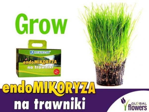 endomikoryza do trawników