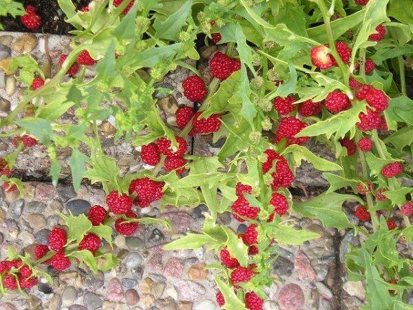 Strawberry Sticks