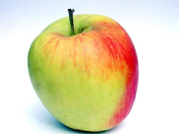 Uprawa mini drzewek owocowych