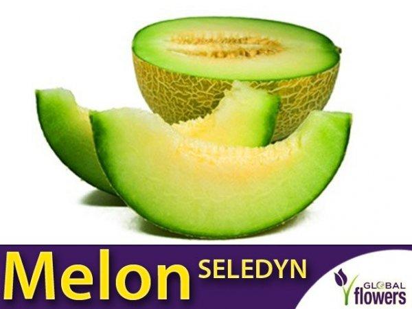 Melon Seledyn (Cucumis melo)