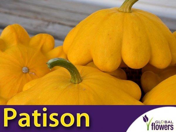 Dynia Patison Orange