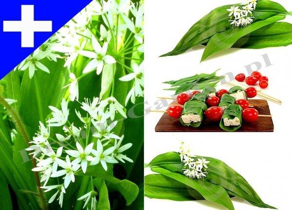 Zdrowy czosnek o pięknych kwiatach