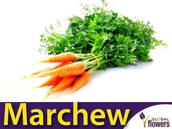 Marchew Flakkese2 Późna (Daucus carota) XXL 500g