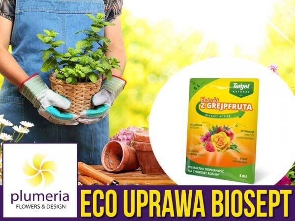 Biosept Activ wyciąg z grefpfruta na odporność roślin