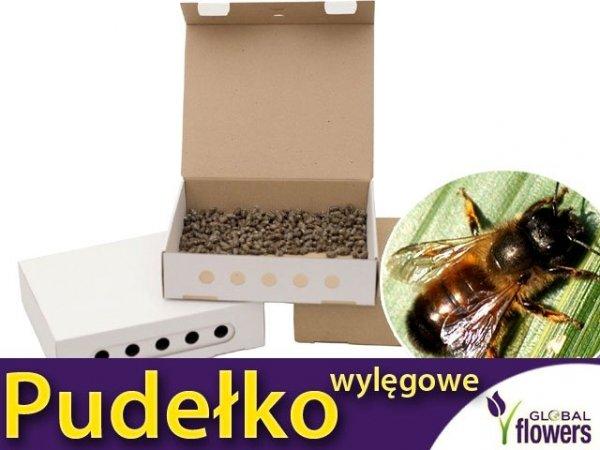 Pudełkow wylęgowe dla pszczoły murarki