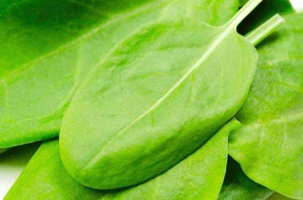 Pyszny zielony szczaw