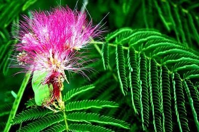 Tańczący Kwiat