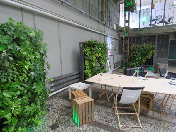 Zielone ściany do ogrodu