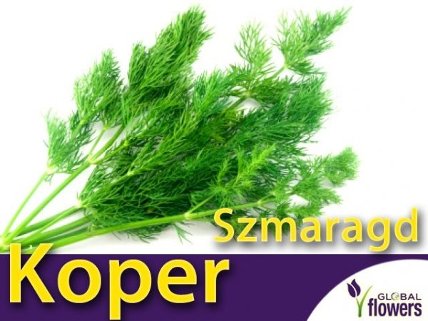 Koper ogrodowy Szmaragd(Anethum graveolens)