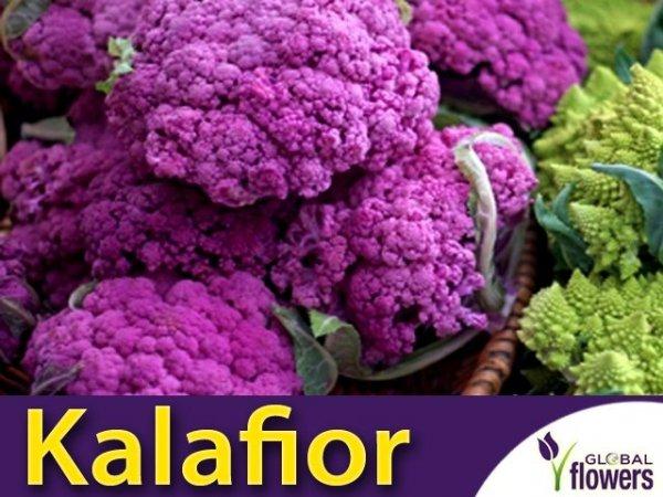 Kalafior Di Sicilia violetto Fioletowy