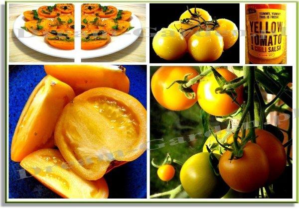 Pomidor Złoty Ożarowski (Lycopersicon Esculentum) 0,5g