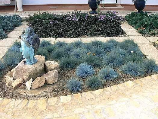 Uprawa traw ozdobnych w ogrodzie