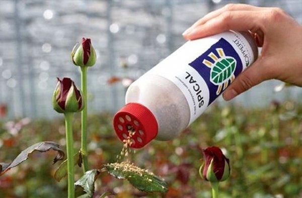 produkt na szkodzniki w ogrodzie