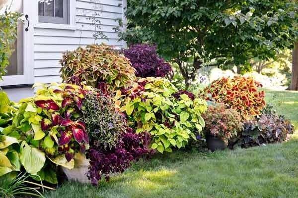 Cudne, kolorowe kwiaty