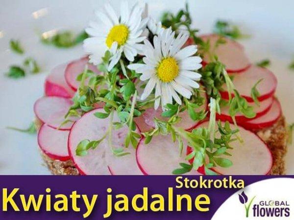 Kwiaty jadalne - Stokrotka pospolita łąkowa biała 0,2g