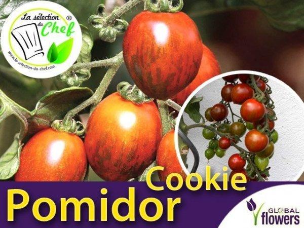 Pomidor tygrysi koktajlowy 'Cookie F1' Sadzonka