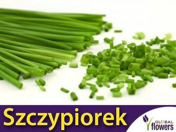 Szczypiorek Medium Leaf (Allium schoenoprasum) 2g