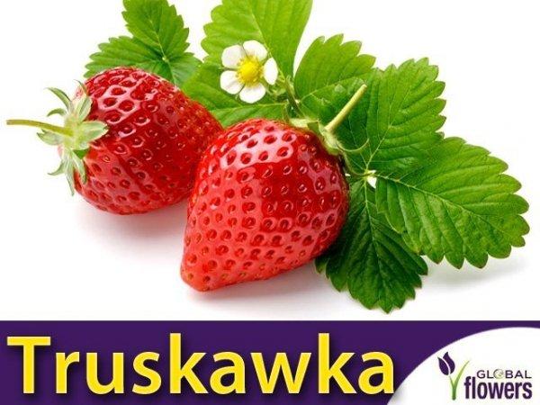 Truskawka Tresca Silnie owocująca (Fragaria x ananassa) 0,05g