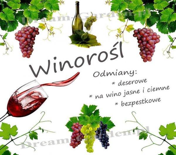 Winorośl uprawa , gleba pielęgnacja