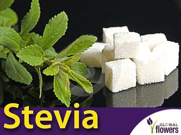 STEWIA - Naturalny słodzik Stevia