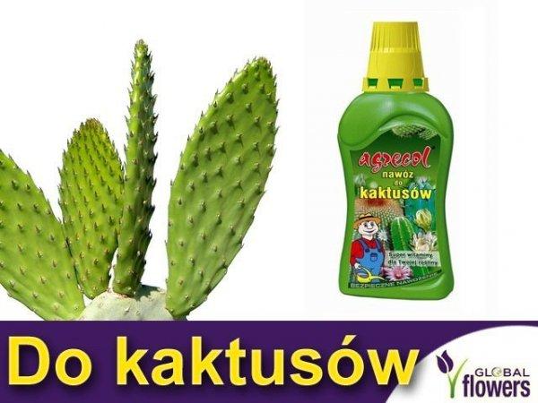 Agrecol Nawóz do kaktusów 0,35L
