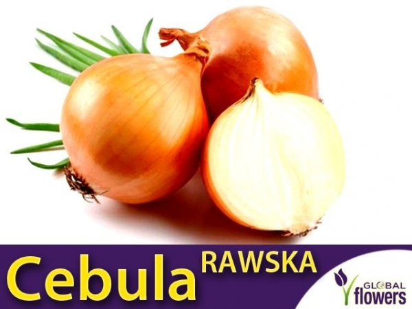 Cebula Rawska (Allium cempa) 500g