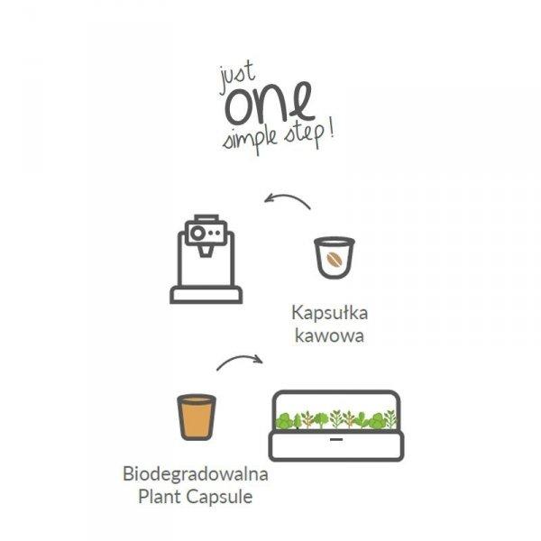 Idealne kapsułki do uprawy ziół i warzyw w każdym domu