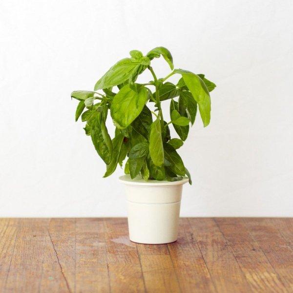Kapsułki roślinne 3-pak Bazylia Click and Grow