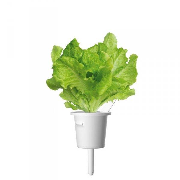 Kapsułki Click and Grow to prosta metoda na uprawę roślin w domu