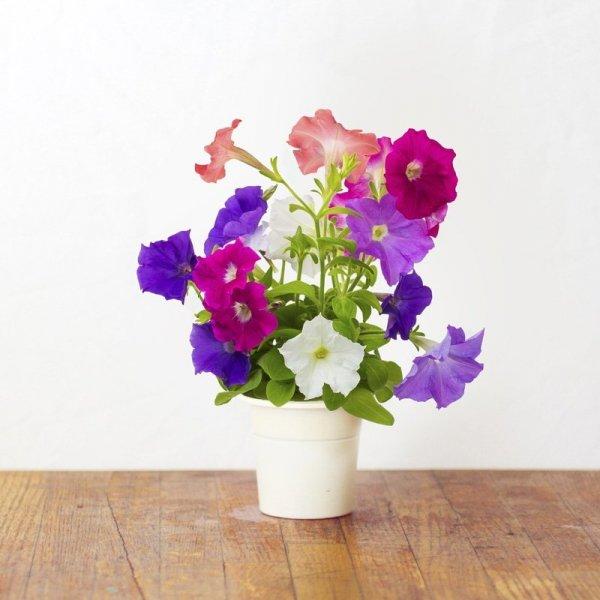 Click and Grow to piękne, aromatyczne kwiaty do każdego wnętrza