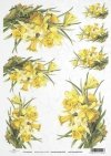 spring, jonquils, bouquet, bouquets, spring breeze, flower, flowers, leaf, leaves, flower petals, R419