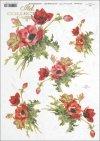 poppy, poppies, flower, flowers, R391