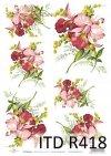 orchidea, storczyk, orchidee, storczyki, kwiat, kwiaty, kwiatek, kwiatki, listki, liście, płatki kwiatów, R418