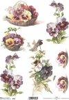 pansies, flower, flowers, leaf, leaves, flower petals, spring, R56