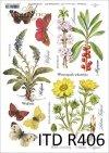 zioła, ziółka, kwiaty, motyle, łąka, rośliny, motyl, motyle, Wulfenia, Wawrzynek wilczełyko, mezereum, Miłek wiosenny, R406