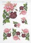 flowers, roses. magenta roses, pink roses