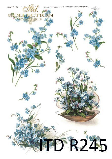 niezapominajka, niezapominajki, wiosna,  drobne niebieskie kwiatki, kwiaty, R245