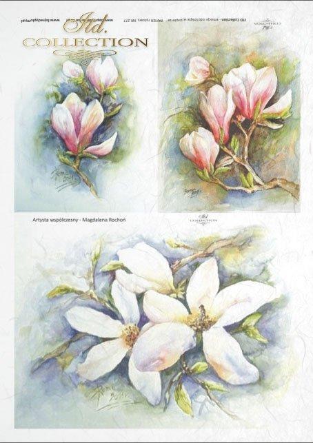 magnolia, magnolias, flower, flowers, Magdalena Rochoń, R277