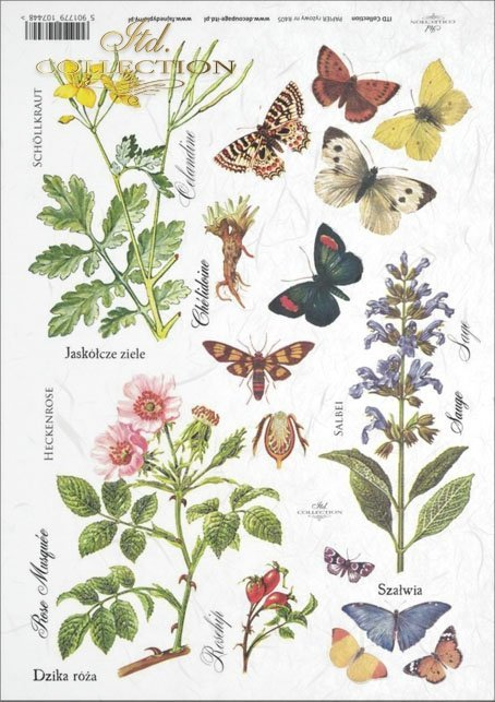 meadow, plants, butterfly, butterflies, flower, flowers, R405, Rosa canina, Celandia, Salvia, Chelidonium majus