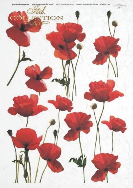 maki, mak, makówki, łąka, meadow, flower, flowers, poppies, R039