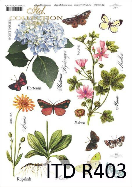 łąka, rośliny, motyl, motyle, hortensja, malwa, arnika, kupalnik, kwiat, kwiaty, R403