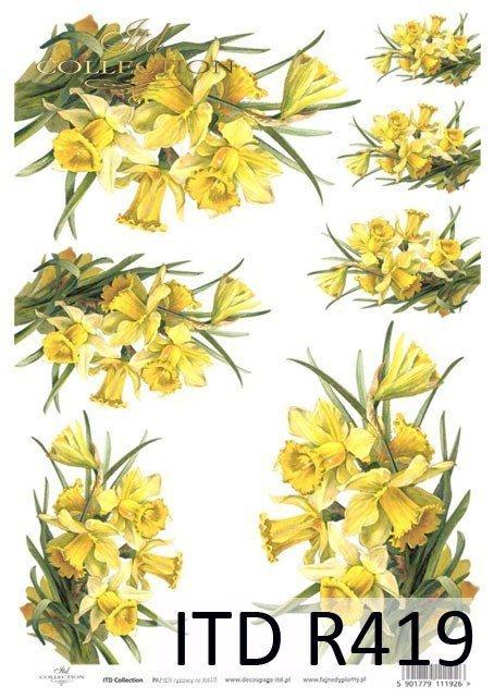 żonkil, żonkile,  kwiat, kwiaty, kwiatek, kwiatki, listki, liście, płatki kwiatów, wiosna, R419