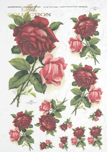 rose, roses, burgundy, pink, flowers, flower, decorative and unique roses