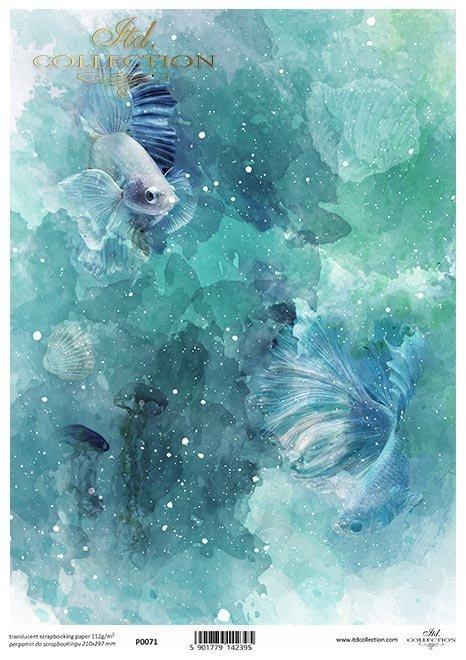 Ocean, głębia, ryby, welony, akwarium