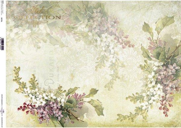 flores de papel de arroz, fondo de color lila, verde*рисовые бумажные цветы, сиреневый, зеленый фон*Reispapierblumen , lila, grüner Hintergrund